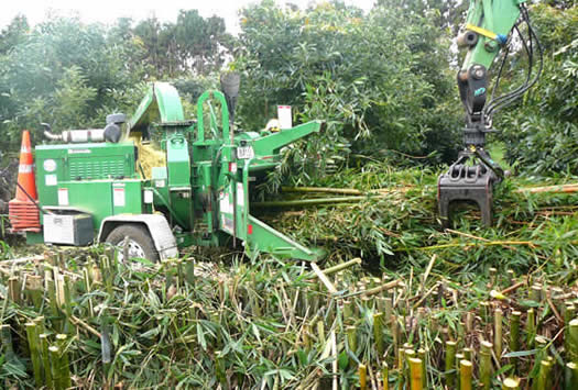bamboo hedge removal and mulching