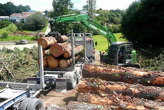 logging mature trees