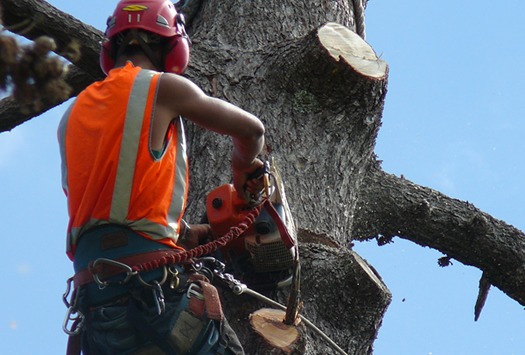 sectional tree removal