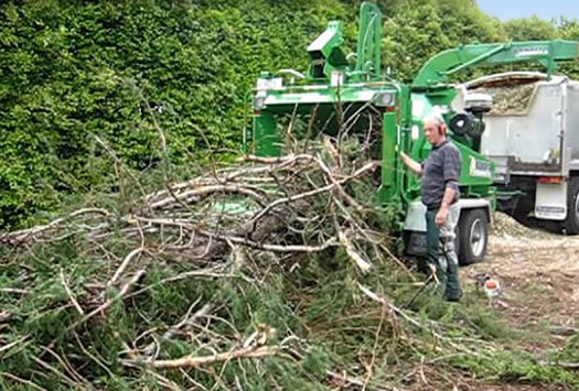 tree chipping