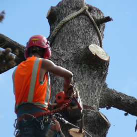 Man removing a tree with chainsaw
