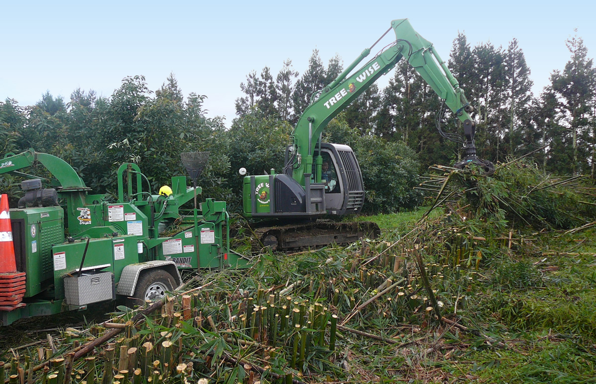 Land Clearing using an excavator and chipper to remove bamboo